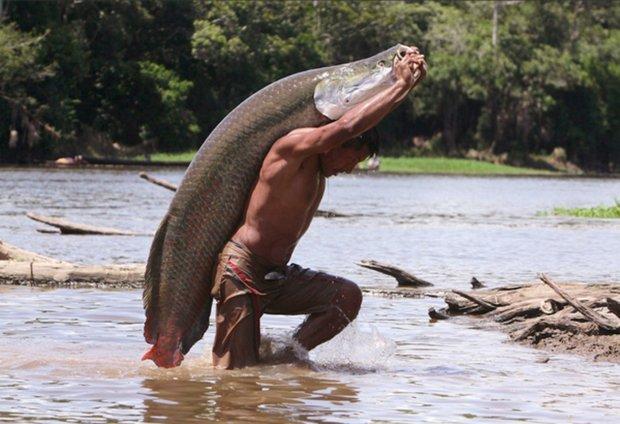 pez paiche